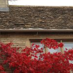 Manor Stables Roof and Red Plant